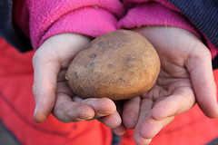 A potato in the hand
