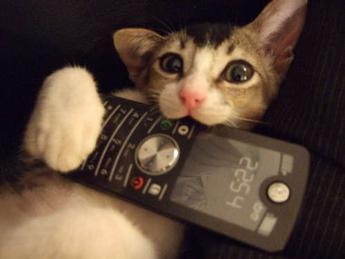 Cat with a mobile phone