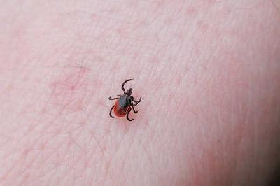 Dare: Get Bitten by a Tick